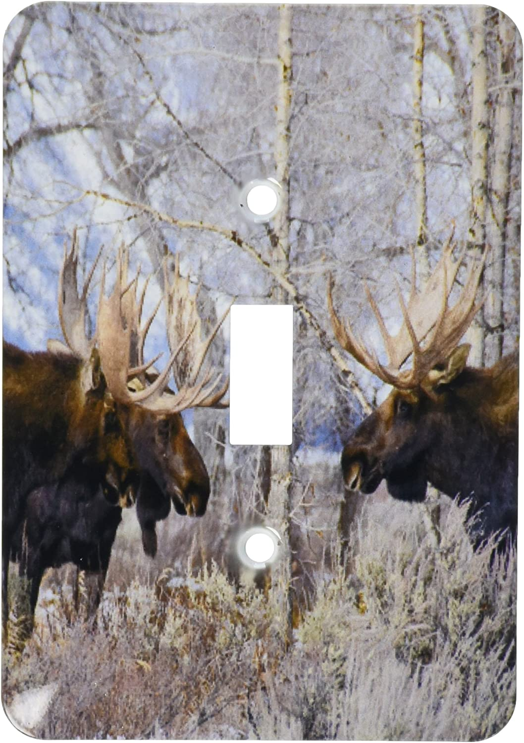 3drose Lsp 206381 1 Bull Moose In Field With Cottonwood Trees Grand Teton Np Wyoming Single Toggle Switch Amazon Com