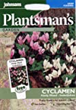 johnsons seeds - Pictorial Pack - Fiore - Ciclamino Hardy Mix - hederifolium - 12 Semi