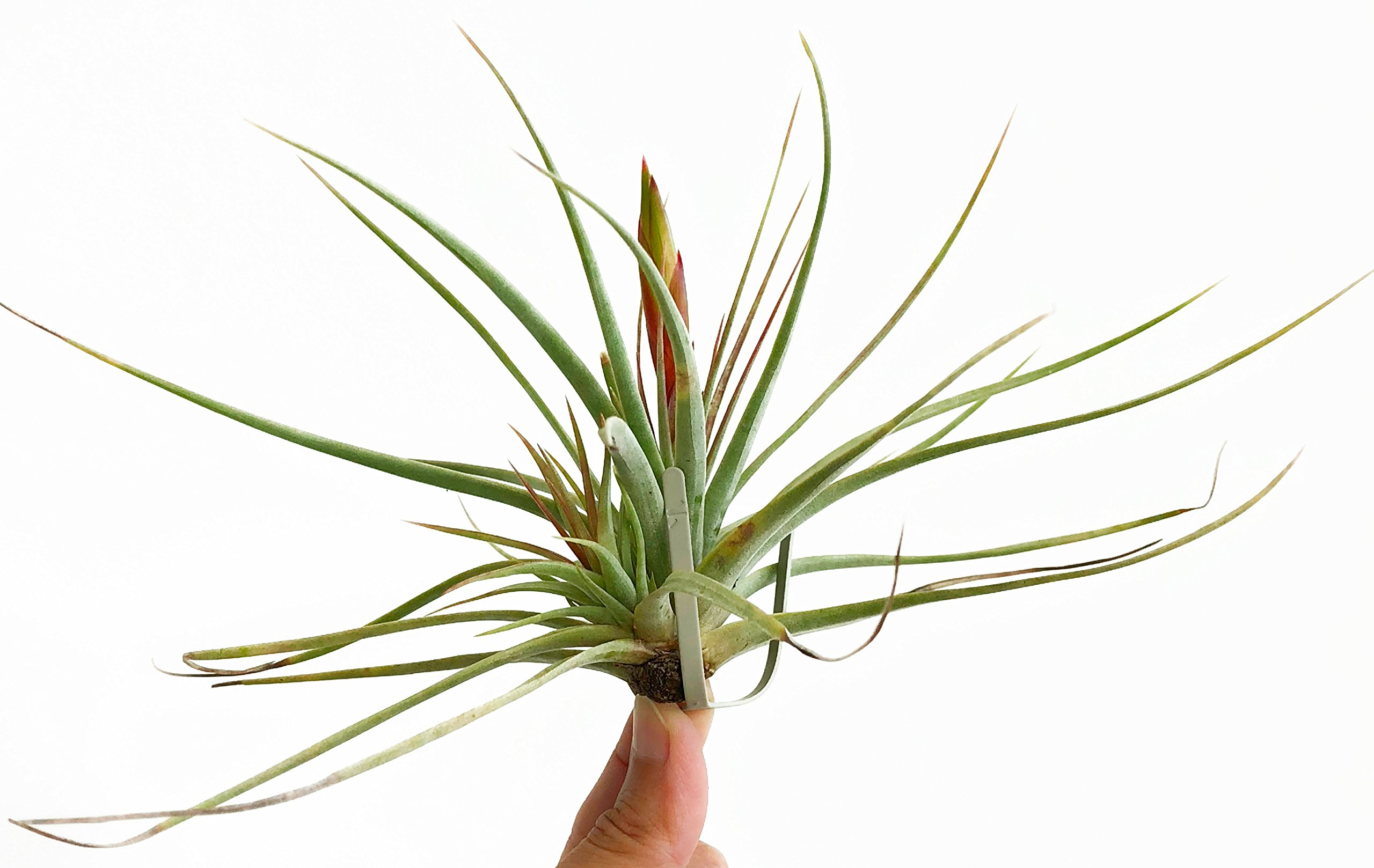 ArtAK Wall Planter Air Plant Holder Wall Hanging AIR KNOTS | 5 Wall Mount Planters for Large Air Plant & Vanda Display | Vertical Garden Modern Hanging Planter | Hanging Air Plants and Holders Grey by ArtAK (Image #9)