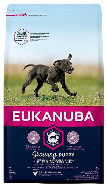Eukanuba Cibo Secco Per Cani Cuccioli Taglia Grossa 1 12 Mesi