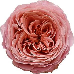 Garden Roses, Romantic Antique, 36 Stems