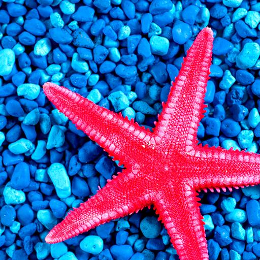 Starfish Photo Collage