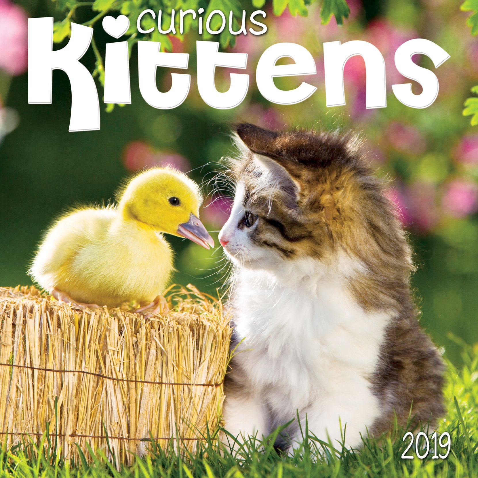 Curious Kittens 2019 Wall Calendar Calendar – August 1, 2018 Zebra Publishing 1772182850 General Home & Garden