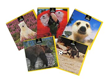 The great british card company national geographic greeting card the great british card company national geographic greeting card pack of 5 m4hsunfo
