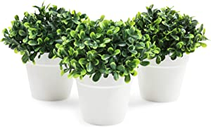 Mini Artificial Plants in White Pots, Home Decor (5 x 5.2 in, 3 Pack)
