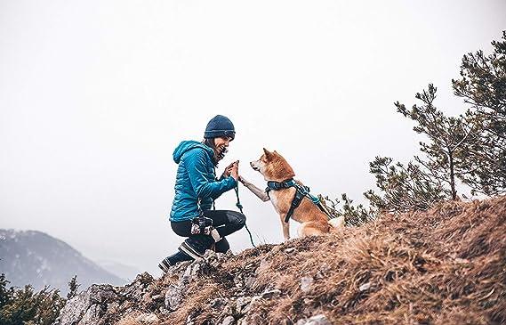 Kletterausrüstung Für Hunde : Embark sierra hunde leine bergklettern seil mit