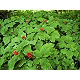 *25+ American Pre- Stratified Ginseng Seeds – Now Is the Time to Sow Ginseng by Seeds and Things- Instructions Included