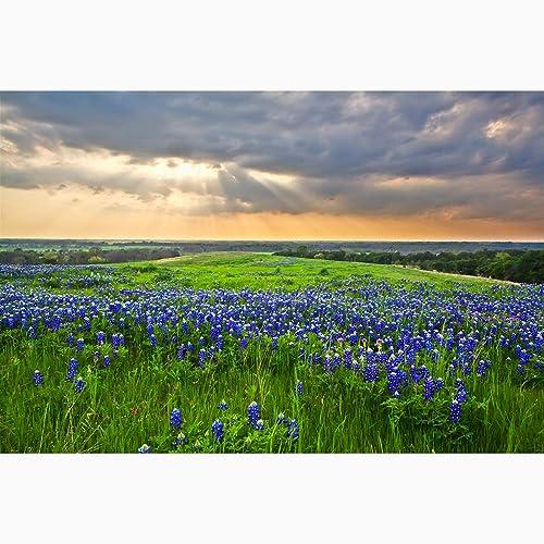 Amazon Com Texas Bluebonnets Photography Bluebonnet Sunbeams