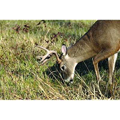 Nature's Seed 2 Acre Great Plains Big Game Food Plot Blend : Garden & Outdoor
