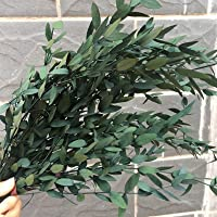 Artificial Flowers 100g/26-40cm Nature Preserved Eucalyptus Fine Leaf,DIY Eternell Flower Floral Plant,Wedding Home…