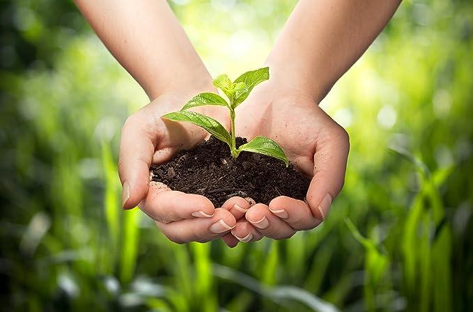 NATUREFOODS - Semillas de Chia Orgánico 1kg | Alto contenido de fibras, proteínas y omega 3 | Apto para veganos |