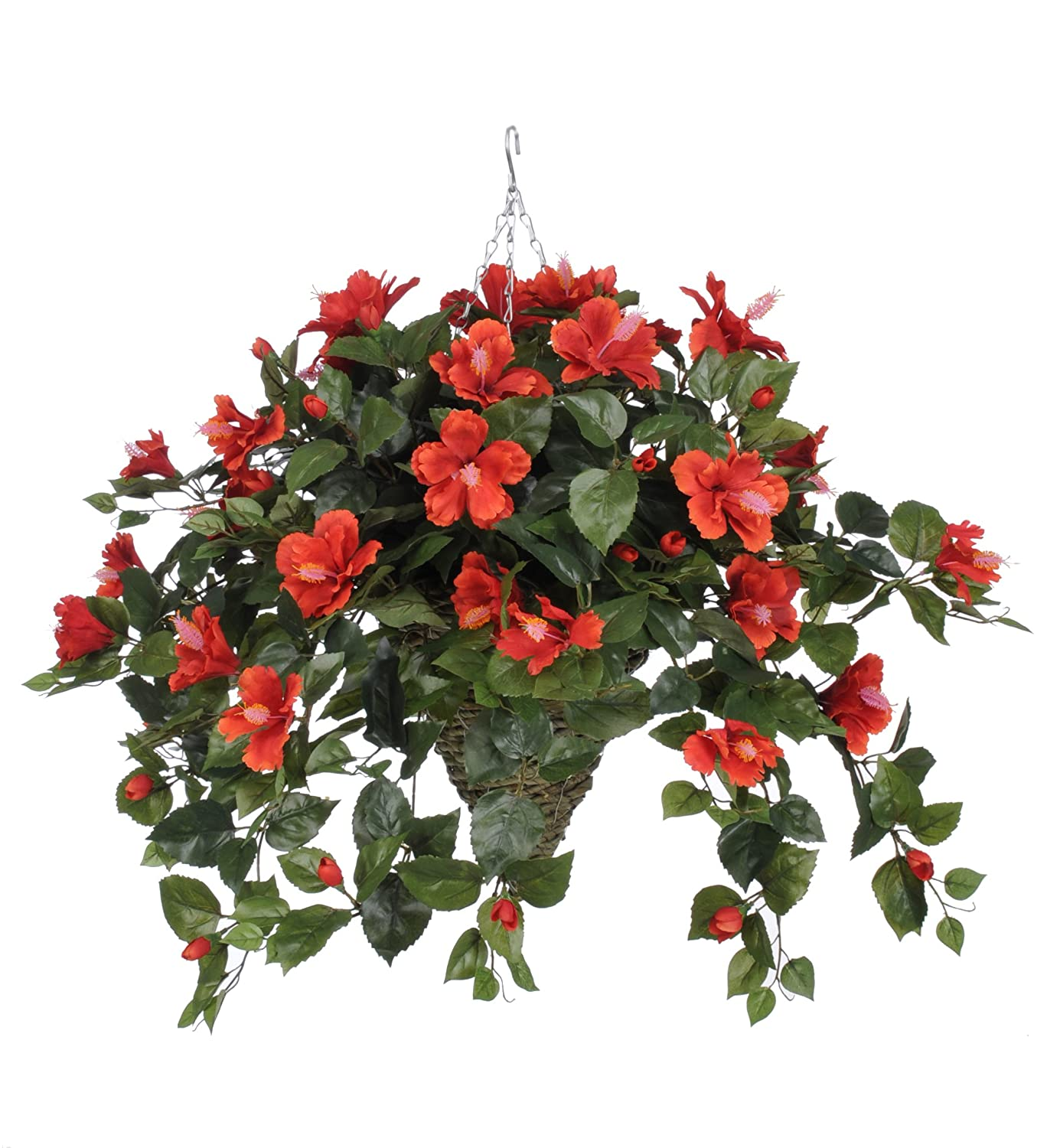Amazon.com: House of Silk Flowers Artificial Red Hibiscus in ... on windmill palm house plant, periwinkle house plant, lantana house plant, baobab house plant, cereus house plant, pineapple house plant, papaya house plant, kentia palm house plant, acacia house plant, spanish moss house plant, mandevilla house plant, orange house plant, taro house plant, cinnamon house plant, bottle palm house plant, cabbage house plant, vanilla house plant, sorrel house plant, blue ginger house plant, colocasia house plant,