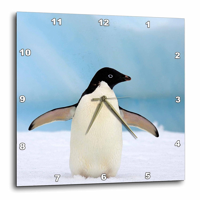 3dRose dpp/_74373/_2 Adelie Penguins on Ice Western Antarctic Peninsula-AN02 SKA0361-Steve Kazlowski-Wall Clock 13 by 13-Inch