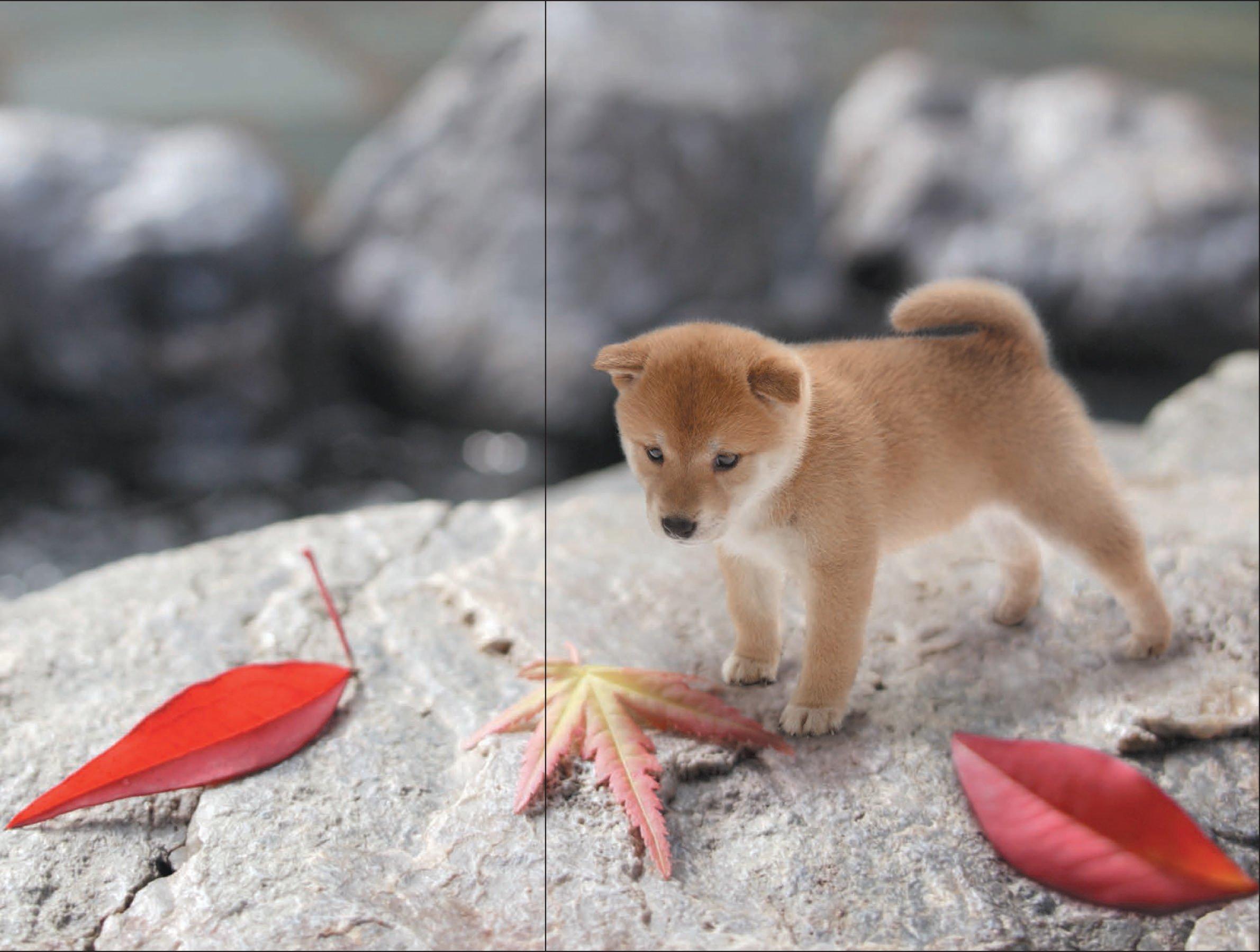 Tiny Dog: Yoneo Morita: 9781452149745: Amazon.com: Books