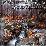 Suoni della natura: bosco ruscello