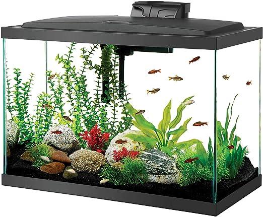 Amazon Com Aqueon Aquarium Starter Kit With Led Lighting 20 High Pet Supplies