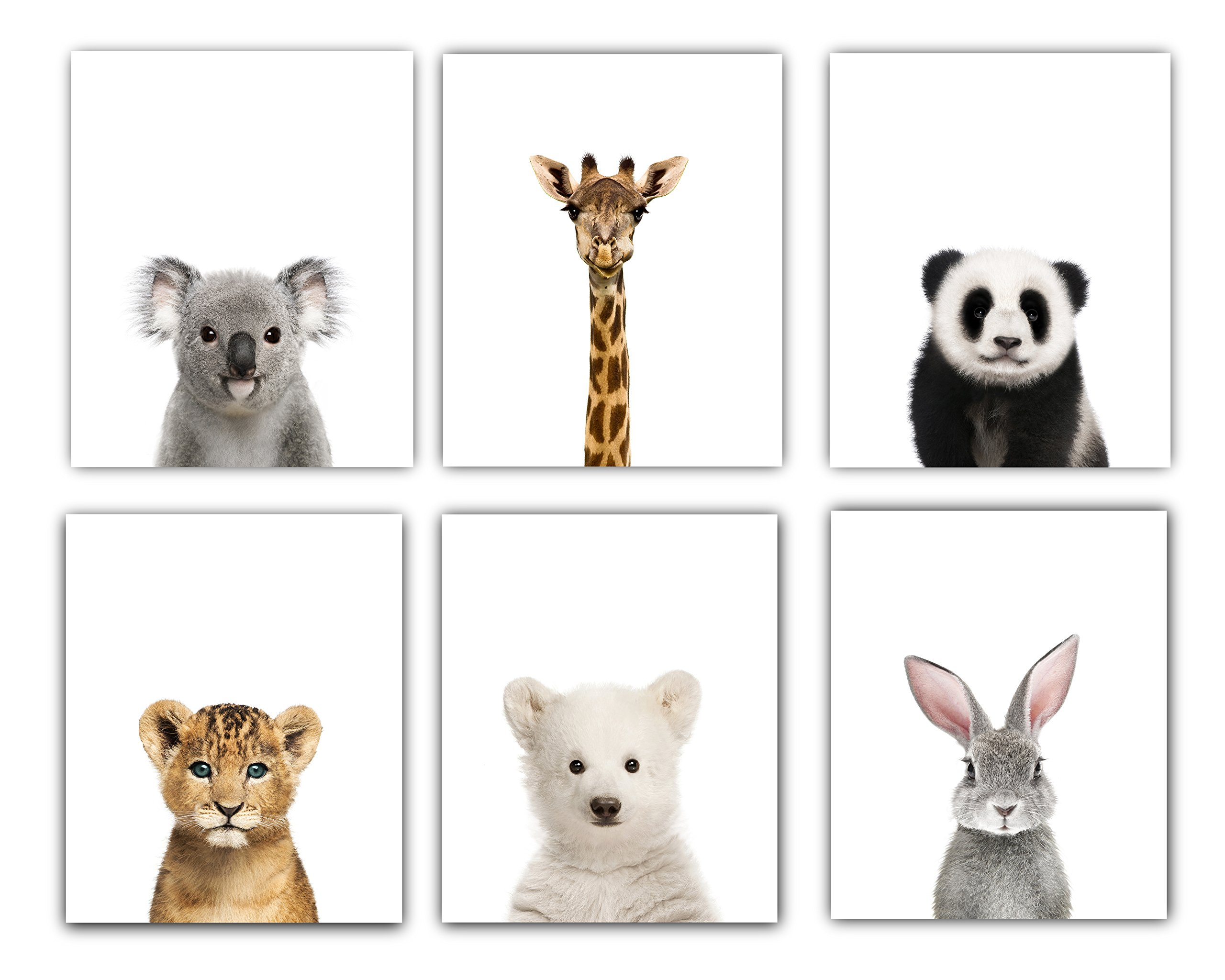 Baby Animals Nursery Wall Decor | Baby Room Decor Animal Nursery Pictures 8x10 | Baby Nursery Decor Cute Animal Photography Wall Prints| Set of 6 Unframed Prints for Baby Boys & Girls