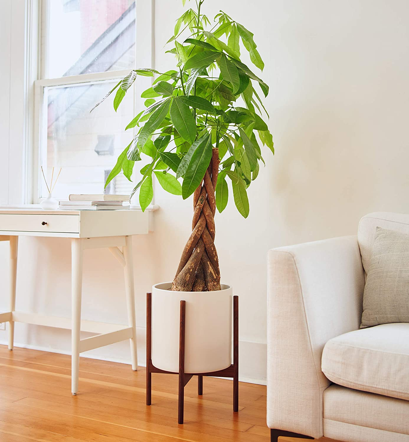 Omysa Mid Century Plant Stand with Pot and Drainage