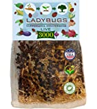 Clark&Co Organic 3000 Live Ladybugs - Good Bugs for Garden - Guaranteed Live Delivery!