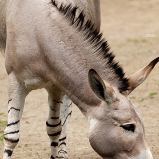 Amazon.com: Funny Donkey Wallpaper -- HD Wallpapers Of