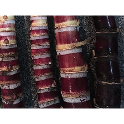 Fresh Sugar Cane -Organic Sugarcane- 3 Sticks Black Red Purple 7 Inches Each, Raw Sugarcane for Chewing-juicing or Planting Canne a Sucre- Canne Ananas-kan-Fresh - Raw Sugar-juicing - Planting : Garden & Outdoor