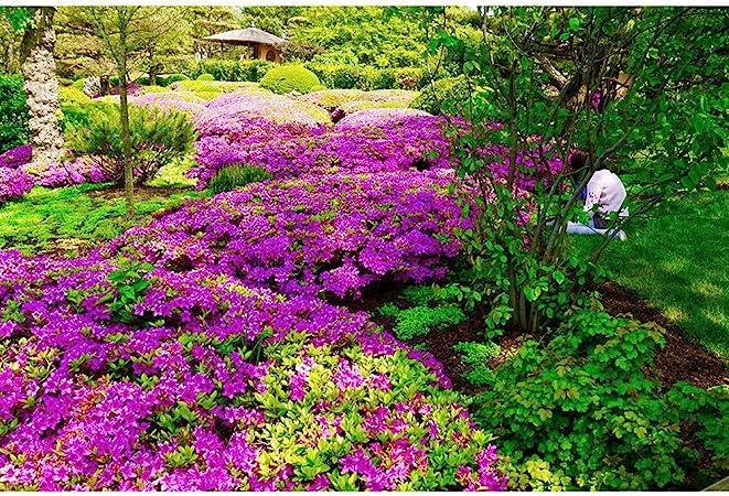 Madera Rompecabezas Jardín Japonés Súper Difícil Reto Adulto Regalo Juguetes Educativos Jardín Botánico Decorativo 500-3000 Piezas 0327 (Size : 3000 Pieces): Amazon.es: Hogar
