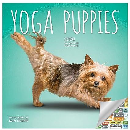 Calendario 2020 para cachorros de yoga, calendario con más ...