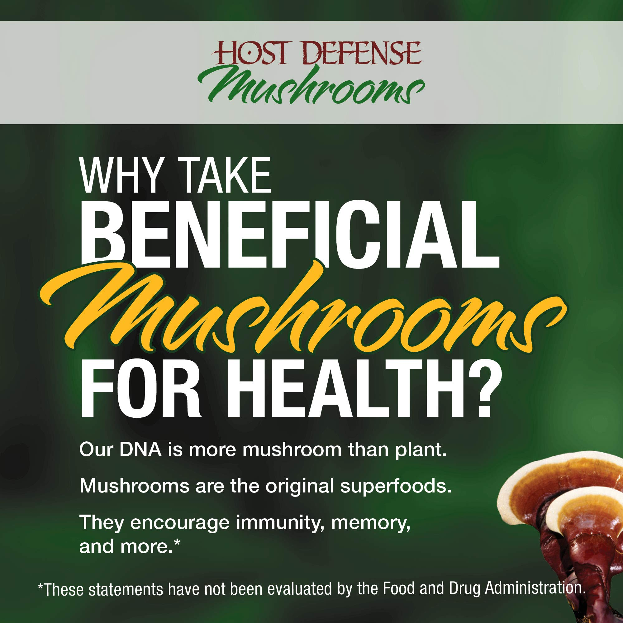 Host Defense - MyCommunity Multi Mushroom Extract, Comprehensive Support for a Robust and Resilient Immune System with Lion's Mane and Turkey Tails, Non-GMO, Vegan, Organic, 120 Servings (4 Ounces) by Host Defense (Image #8)