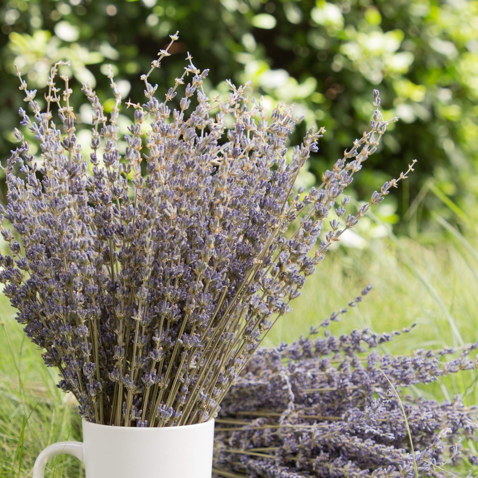Timoo Dried Lavender Bundles 100% Natural DriedLavenderFlowers for Home Decoration, Photo Props, Home Fragrance, 2 Bundles Pack by Timoo (Image #2)