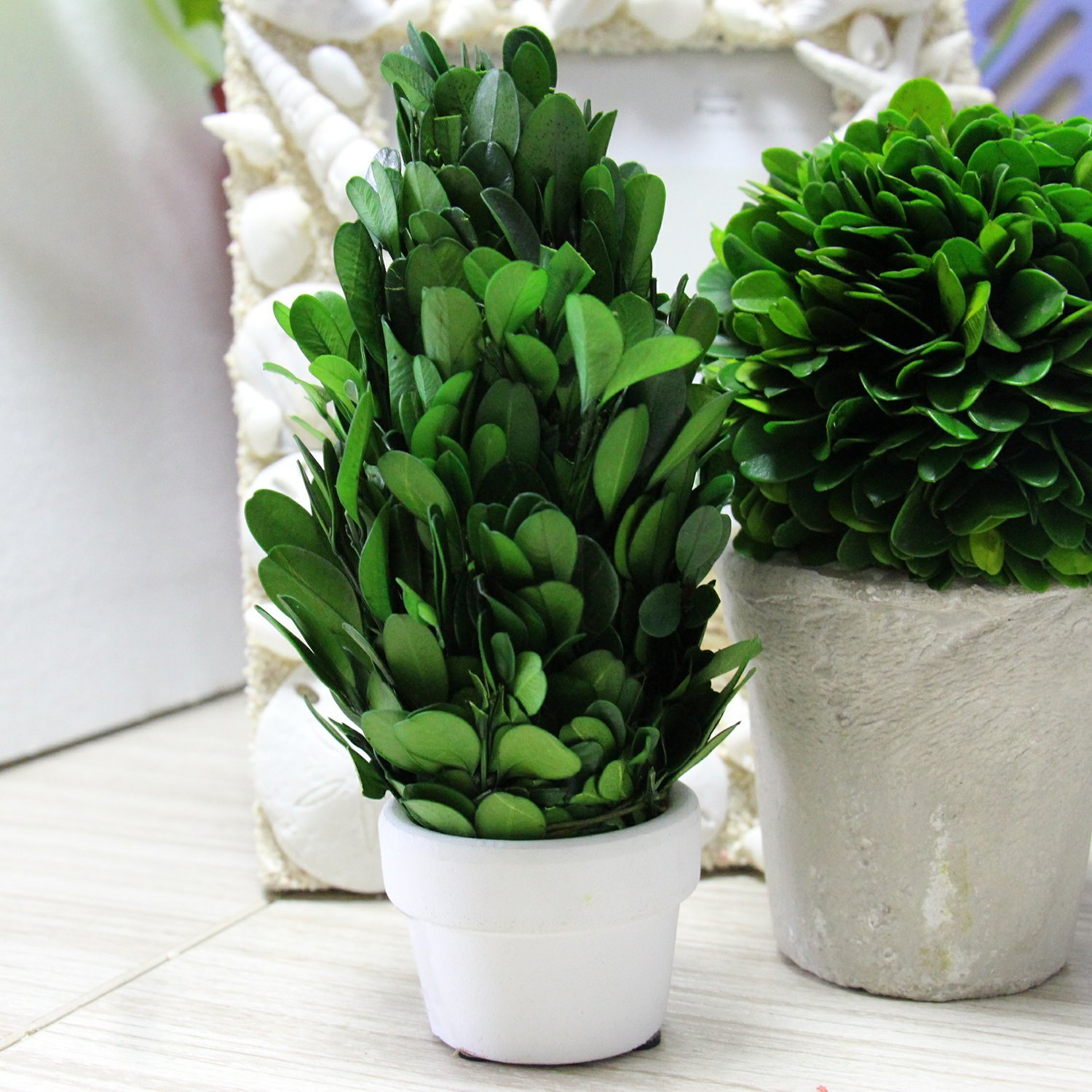 """Natural Indoor Greenery 2.4/""""Wx2.4/""""Dx6.3/""""H Simple Care COCOMIA Preserved Boxwood Tree with Small Pot"""