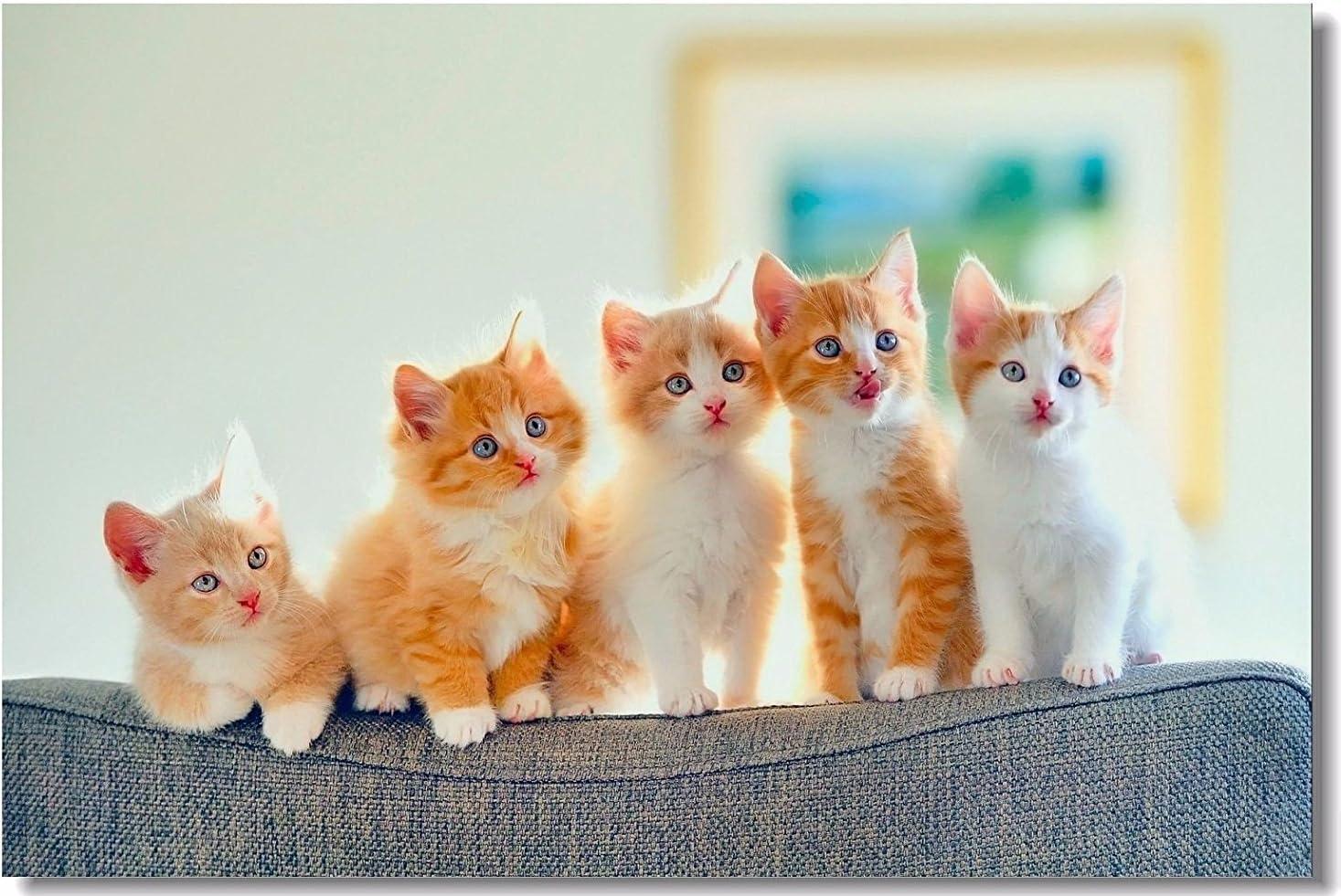 Heartland Plush Throw Blanket Kittens 50x60 Soft /& Warm
