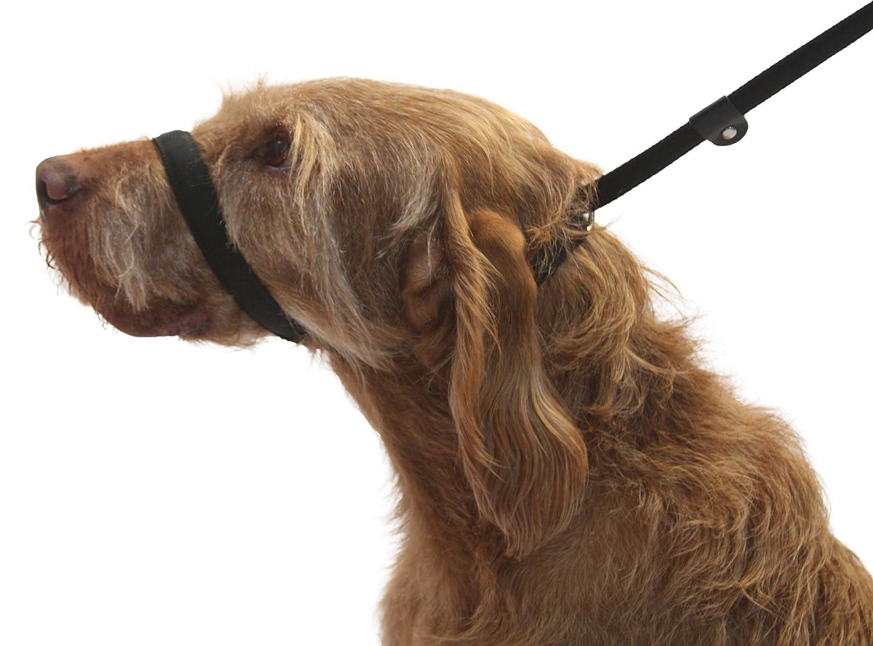 Hundeleine. Abbildung von 8 Hundeleine. 3 arten von hundeleine in 1 Produkt. Stoppt Hund ziehen. Schwarz. Dogs & Co.