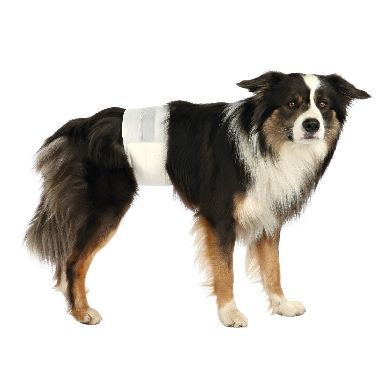 Trixie 23641 Pañales para Perro Macho, S-M, 30-46 cm, 12 Unidades, S: Amazon.es: Productos para mascotas