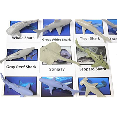 Curious Minds Busy Bags Montessori Sharks Animal Match Cards and Figurines. Nomenclature Science Work Continent Box: Toys & Games