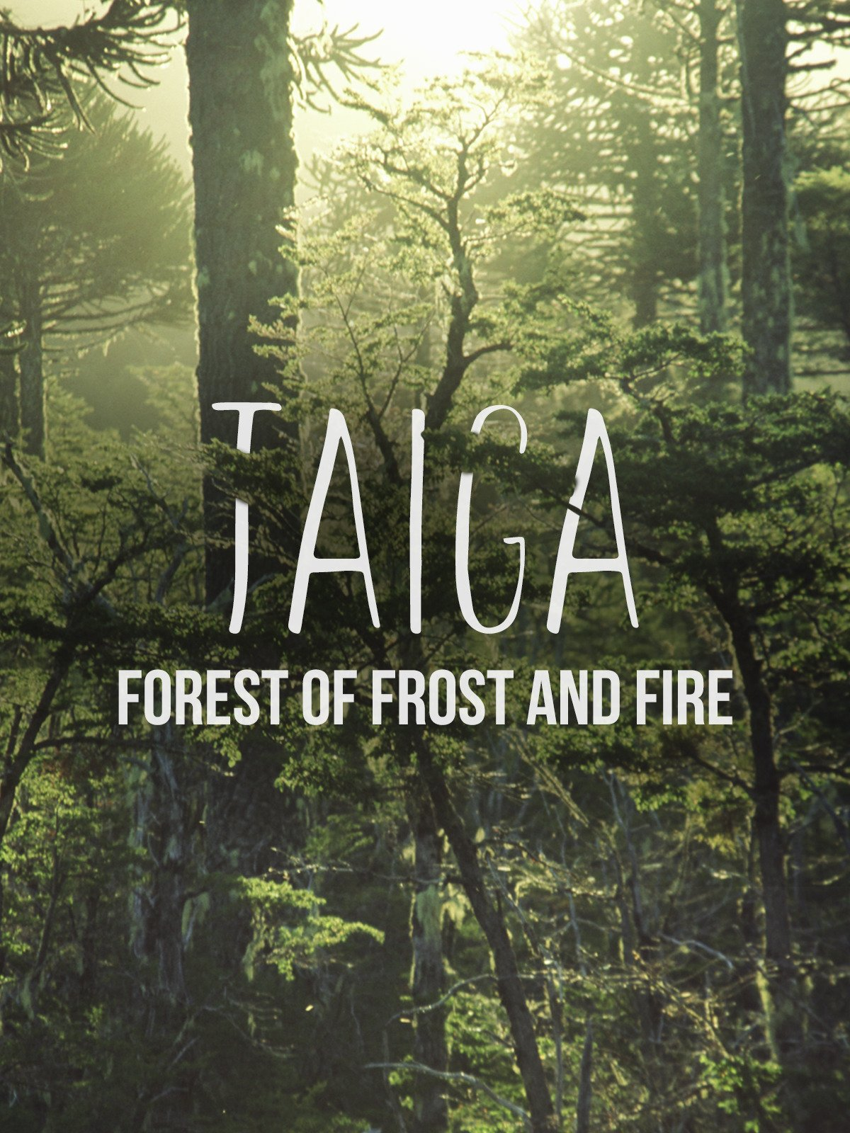 Taiga: Forest of Frost and Fire on Amazon Prime Video UK