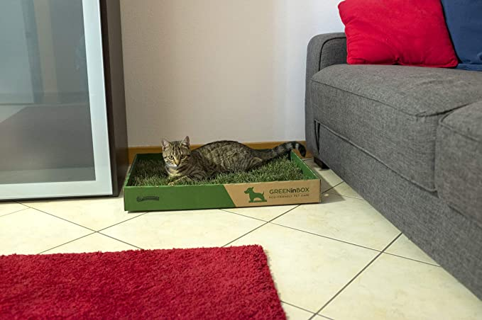- GreeninBox Special Cat - Arenero para gatos con un estrato de la auténtica hierba Nepeta Cataria: Amazon.es: Jardín