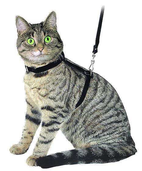 Arnés para gatos con correa 120 cm, rojo, de ante: Amazon.es ...
