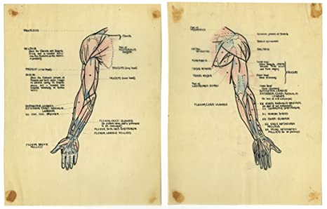 Amazon.com: Vintage Anatomy Illustrations Circa 1936 By Eileen ...