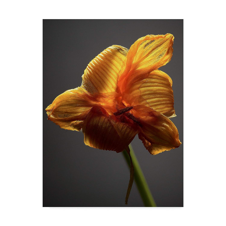 Trademark Fine Art Studio Flowers XI by James Mcloughlin, 14x19