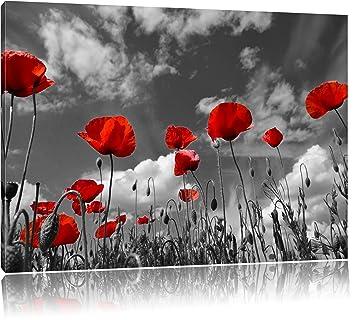 Wundervolle Wiese Mit Roten Blumen Schwarz Weiss Format 120x80 Auf