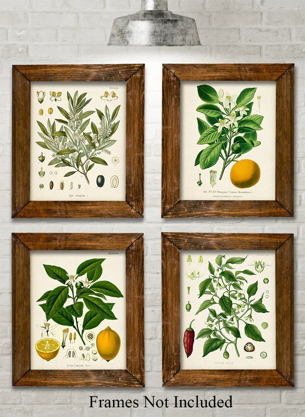 Kitchen Botanicals Art Print - Set of 4 11x14 Unframed Art Prints - Great Kitchen Decor and Gift for Nature Lovers by Personalized Signs by Lone Star Art