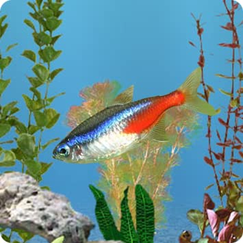 anipet freshwater live