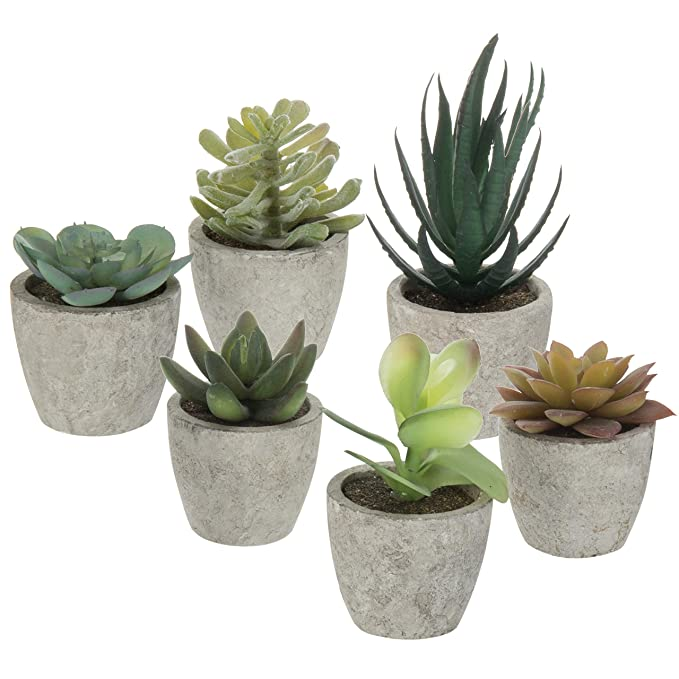 Macetas para cactushttps://amzn.to/2E7gReC