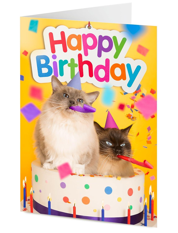 Tarjeta de cumpleaños, dos gatos Ragdoll con matasuegras y ...