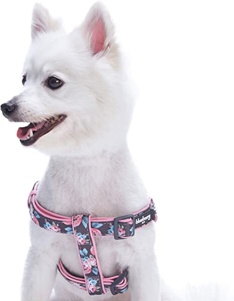 Blueberry Pet 7 Patterns Soft and Comfy Flower Print Neoprene Padded Dog Harnesses   Amazon