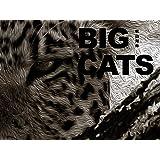 BIG CATS(ビッグ キャッツ)