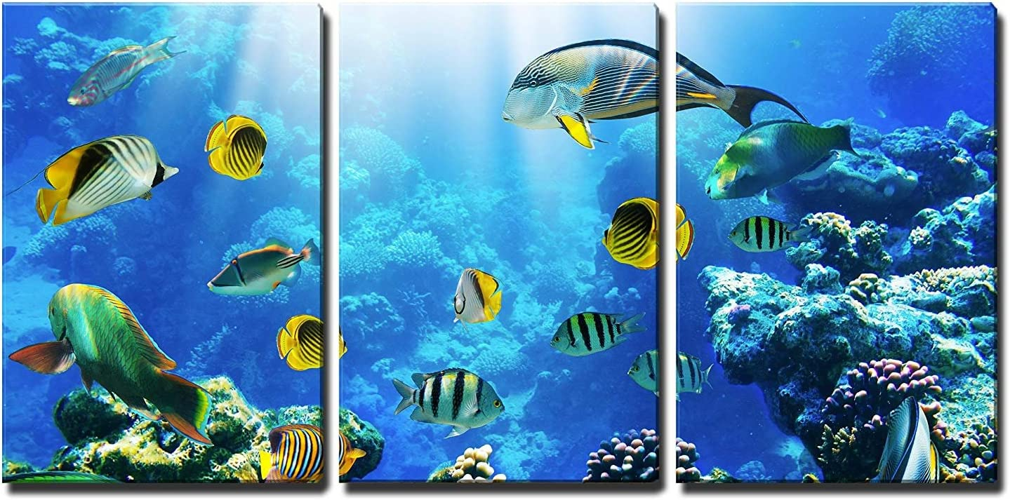 wall26 - 3 Piece Canvas Wall Art - Photo of a Tropical Fish on a Coral Reef - Modern Home Art Stretched and Framed Ready to Hang - 16