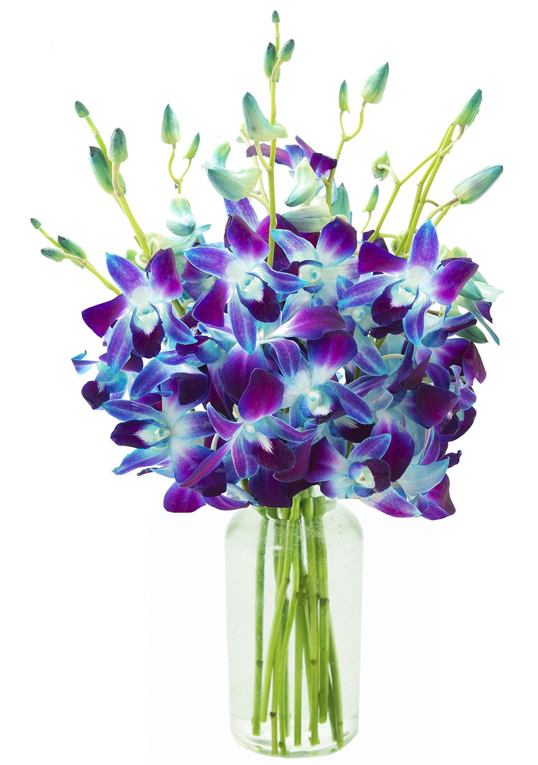 KaBloom Premium 2-Pack Exotic Sapphire Orchid Bouquet of Blue Orchids from Thailand with Vase by KaBloom