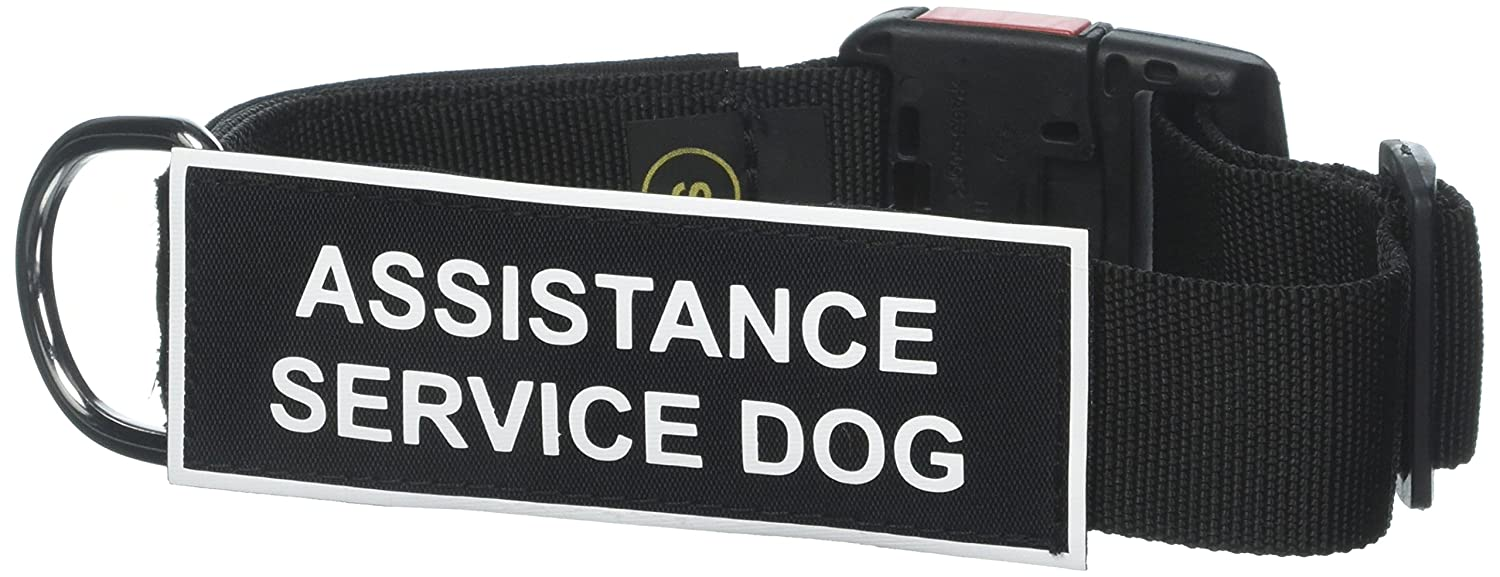 Dean and Tyler Patch Collar , Nylon Dog Collar with ASSISTANCE SERVICE DOG Patches Black Size  Small Fits Neck 18-Inch to 21-Inch