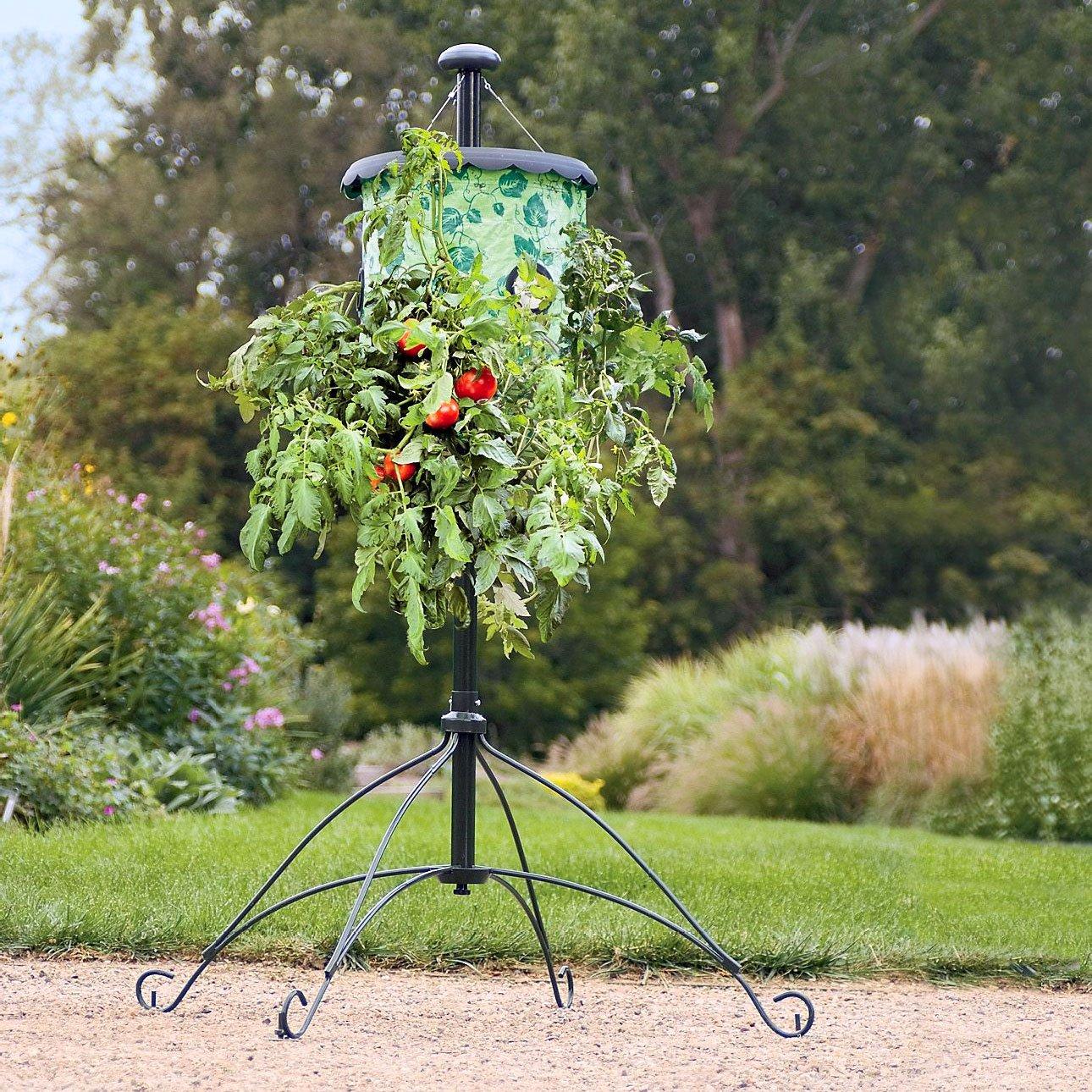 Amazon.com : Topsy Turvy® Hummingbird Upside Down Planter   Red : Hanging  Planters : Garden U0026 Outdoor